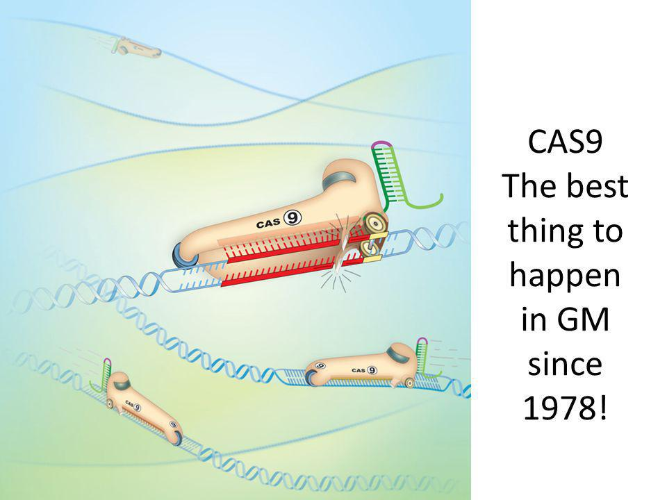 CAS9 The best thing to happen in GM since 1978!