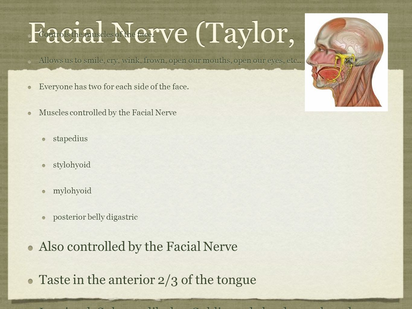 Facial Nerve (Taylor, 2012) Also controlled by the Facial Nerve