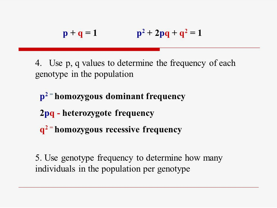 p + q = 1 p2 + 2pq + q2 = 1 Use p, q values to determine the frequency of each. genotype in the population.