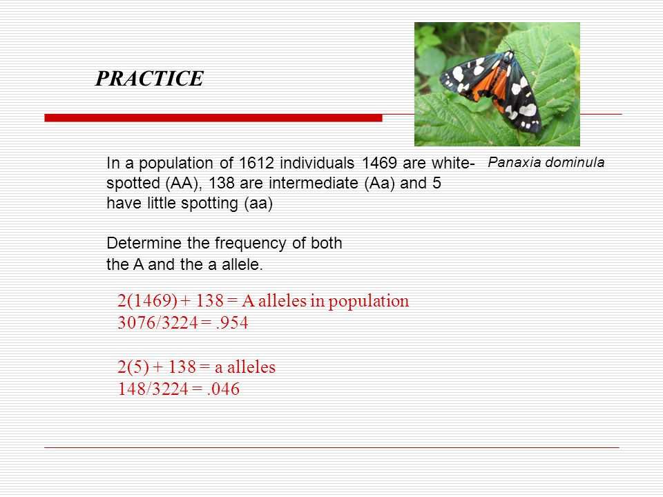 PRACTICE 2(1469) + 138 = A alleles in population 3076/3224 = .954