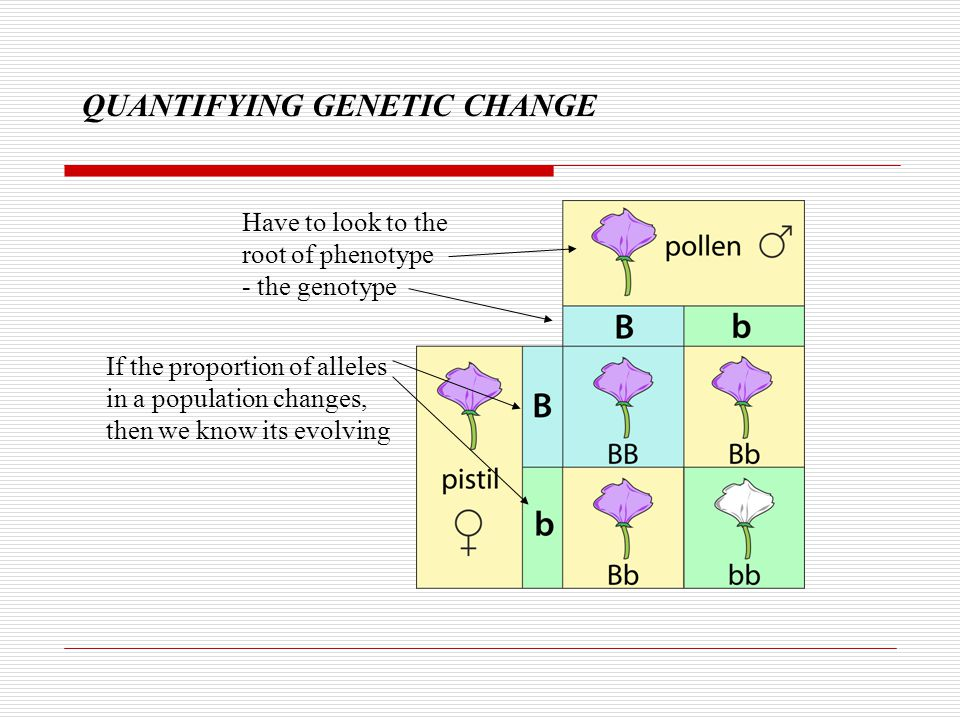 QUANTIFYING GENETIC CHANGE