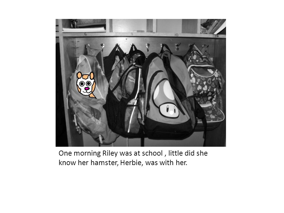 One morning Riley was at school , little did she know her hamster, Herbie, was with her.