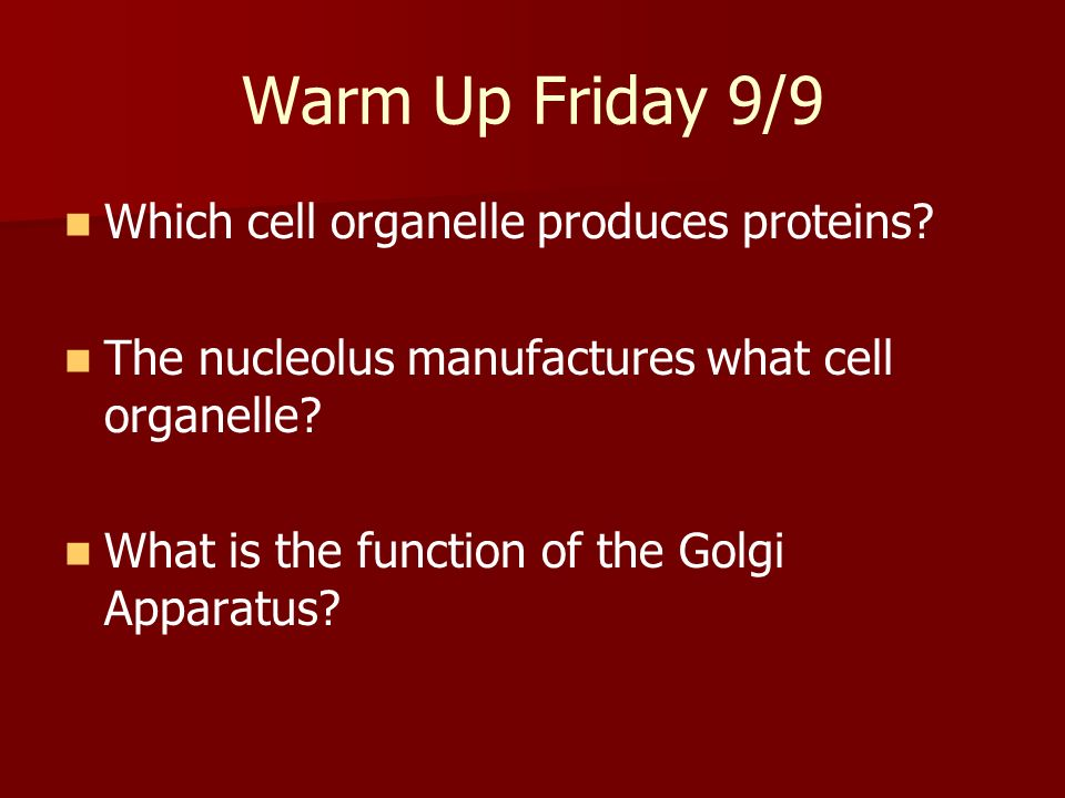 Warm Up Friday 9/9 Which cell organelle produces proteins