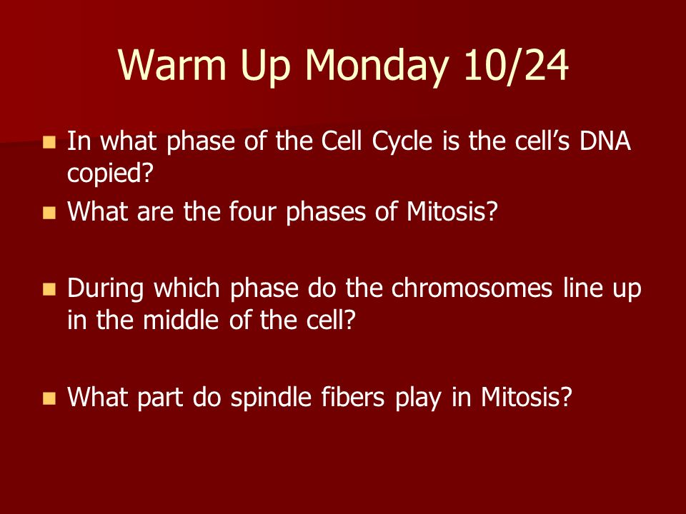 Warm Up Monday 10/24 In what phase of the Cell Cycle is the cell's DNA copied What are the four phases of Mitosis