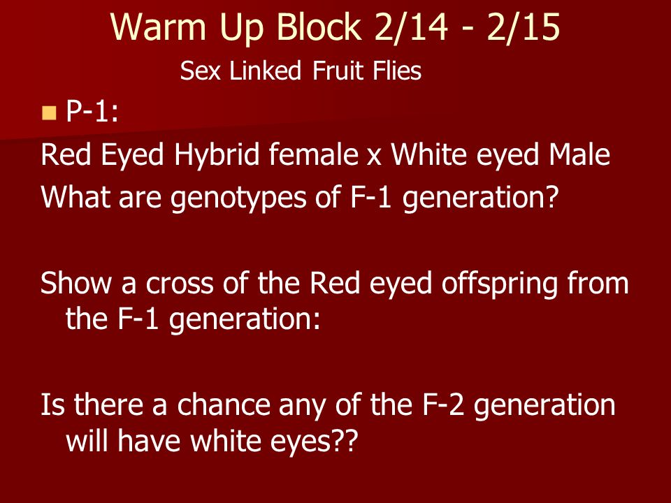 Warm Up Block 2/14 - 2/15 Sex Linked Fruit Flies. P-1: Red Eyed Hybrid female x White eyed Male. What are genotypes of F-1 generation
