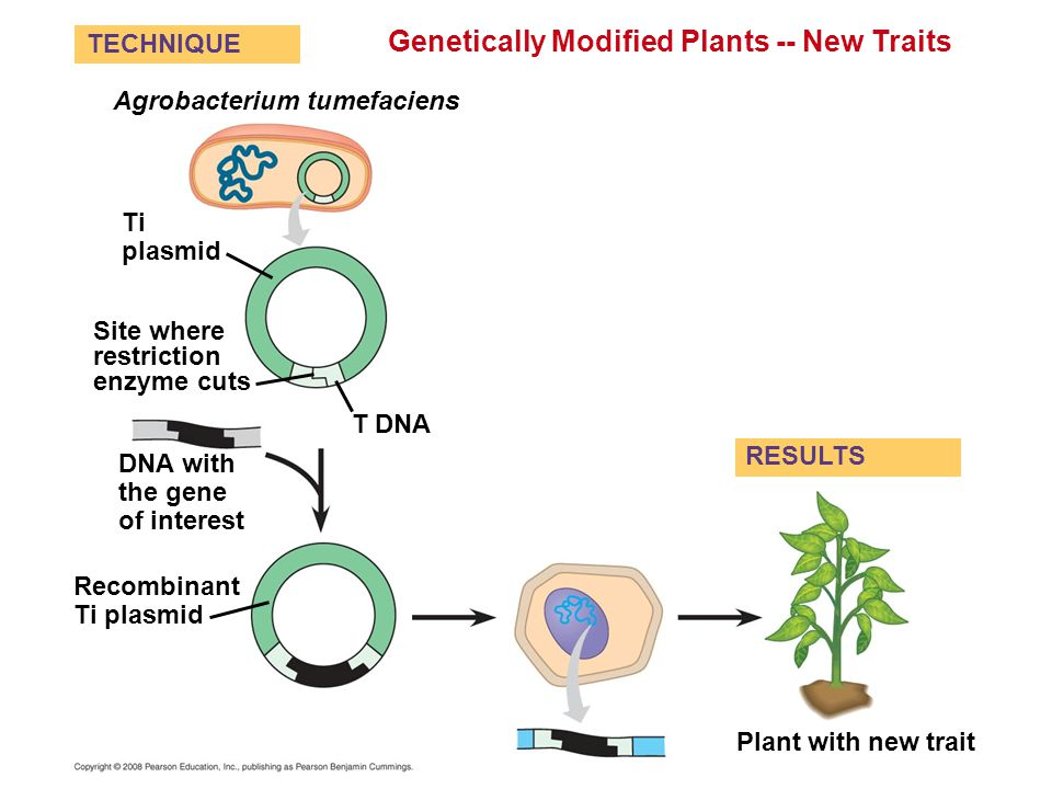Genetically Modified Plants -- New Traits