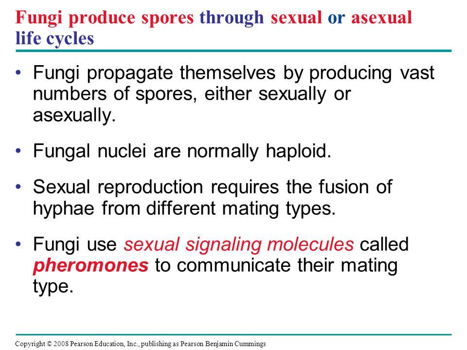 Fungi produce spores through sexual or asexual life cycles