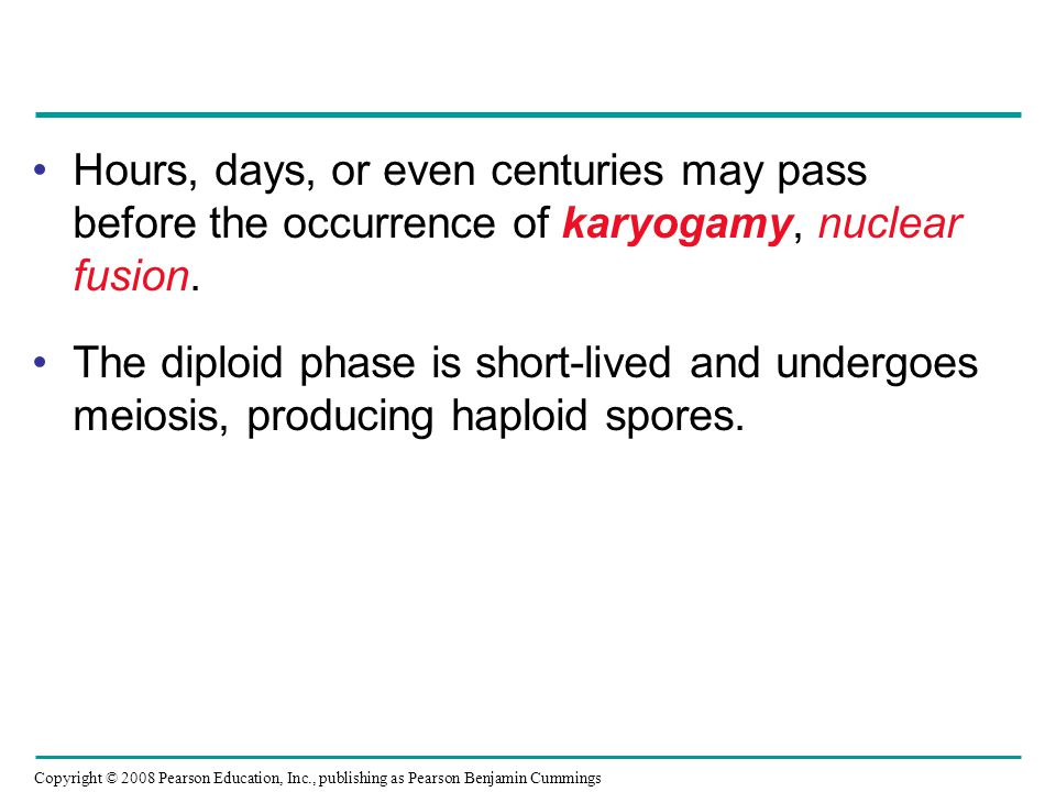 Hours, days, or even centuries may pass before the occurrence of karyogamy, nuclear fusion.