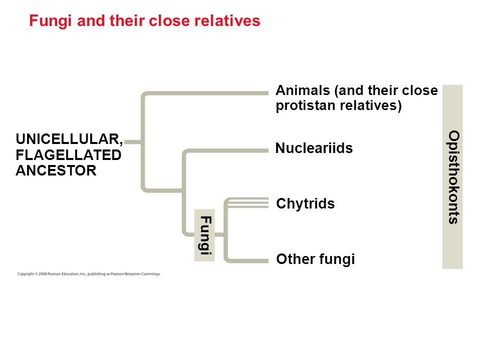 Fungi and their close relatives