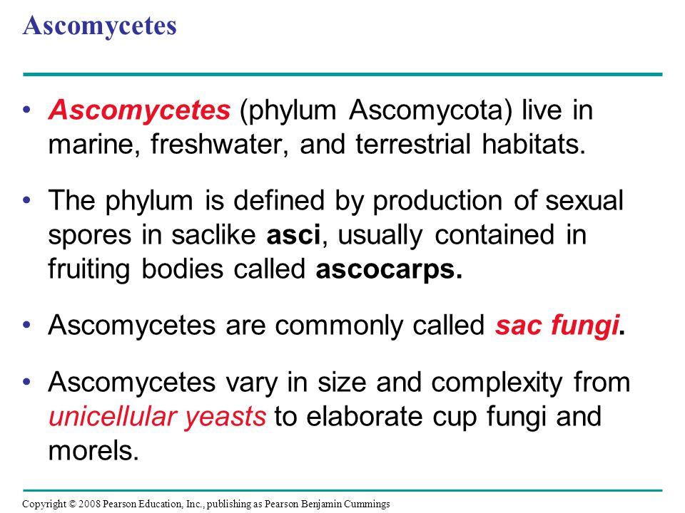 Ascomycetes Ascomycetes (phylum Ascomycota) live in marine, freshwater, and terrestrial habitats.