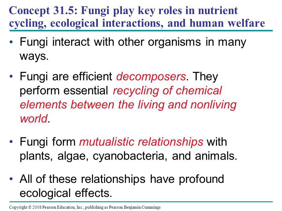 Concept 31.5: Fungi play key roles in nutrient cycling, ecological interactions, and human welfare