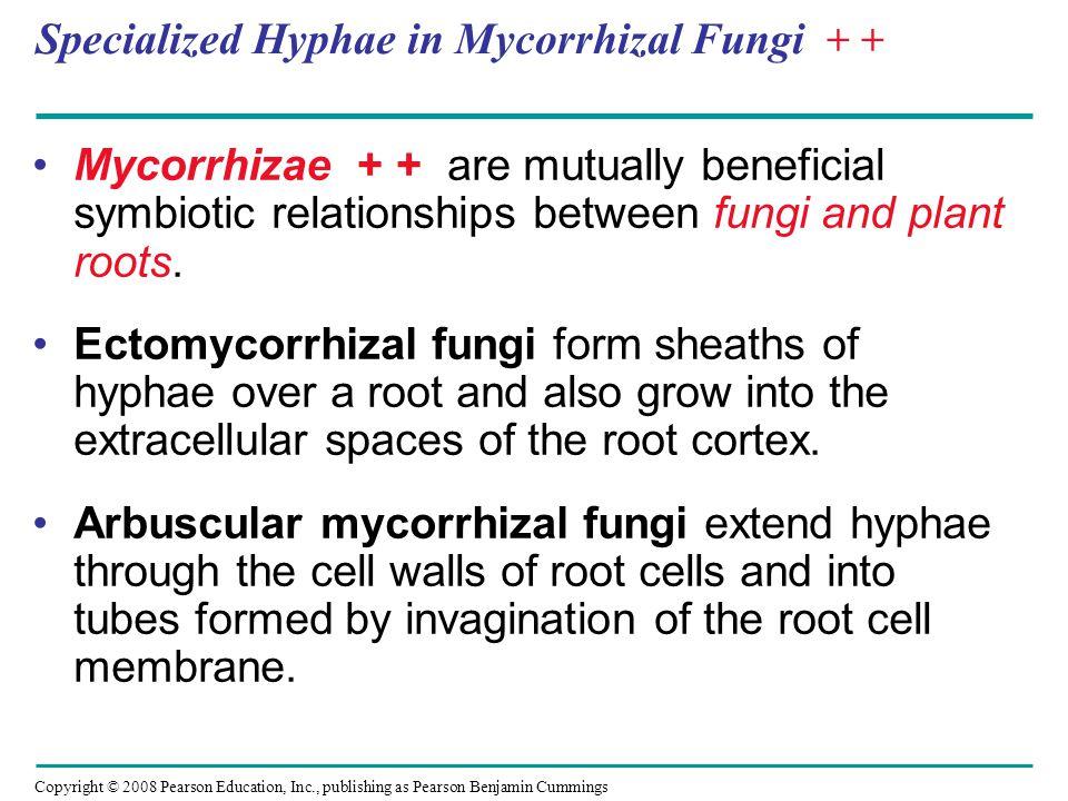 Specialized Hyphae in Mycorrhizal Fungi + +