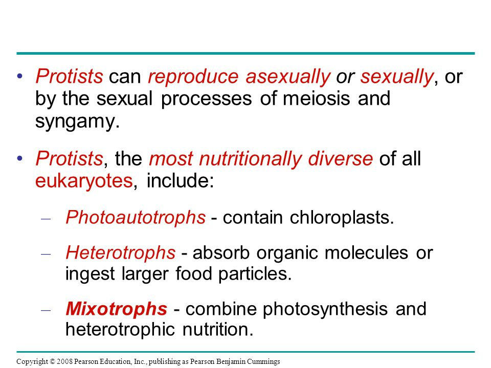 Protists, the most nutritionally diverse of all eukaryotes, include: