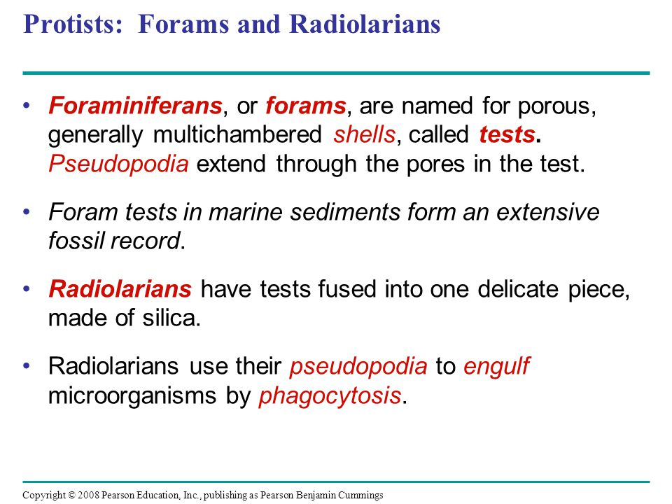 Protists: Forams and Radiolarians