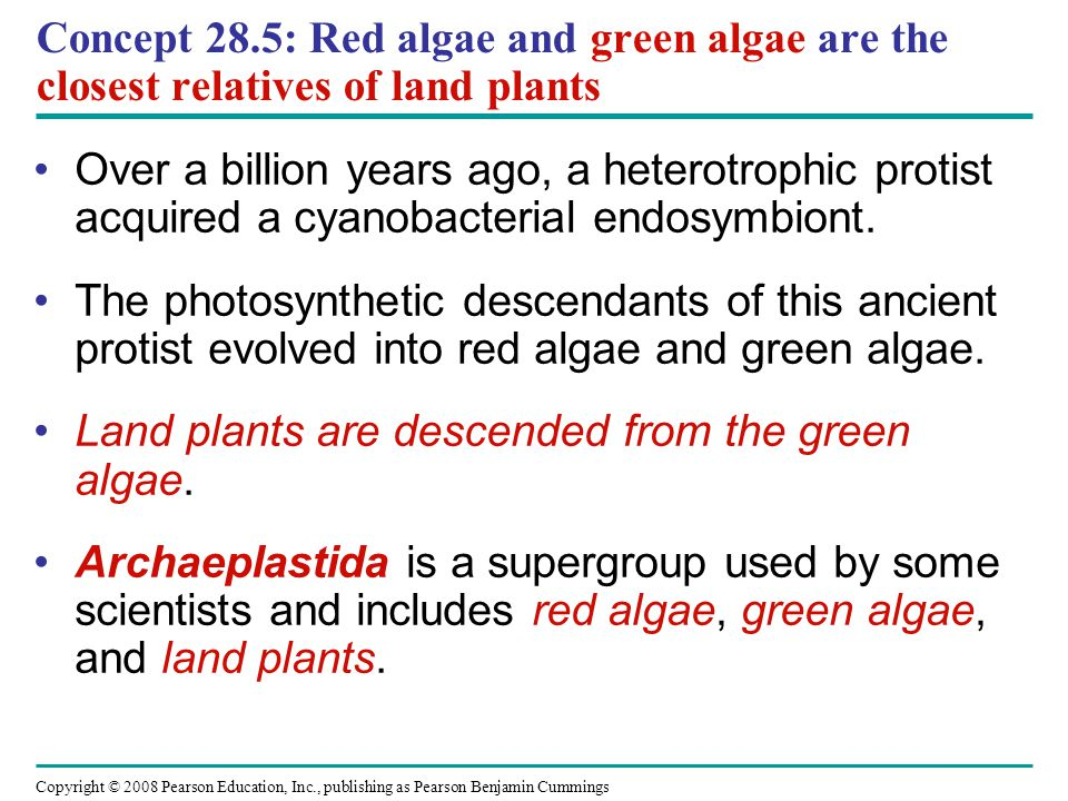 Concept 28.5: Red algae and green algae are the closest relatives of land plants