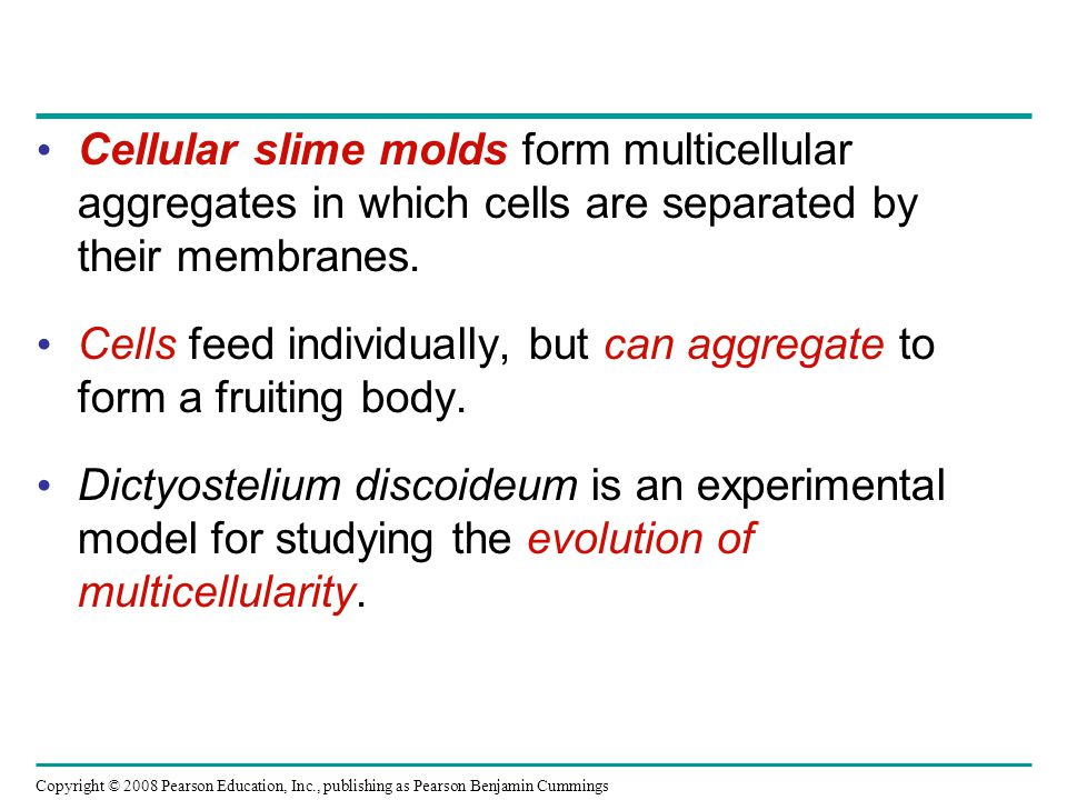 Cellular slime molds form multicellular aggregates in which cells are separated by their membranes.