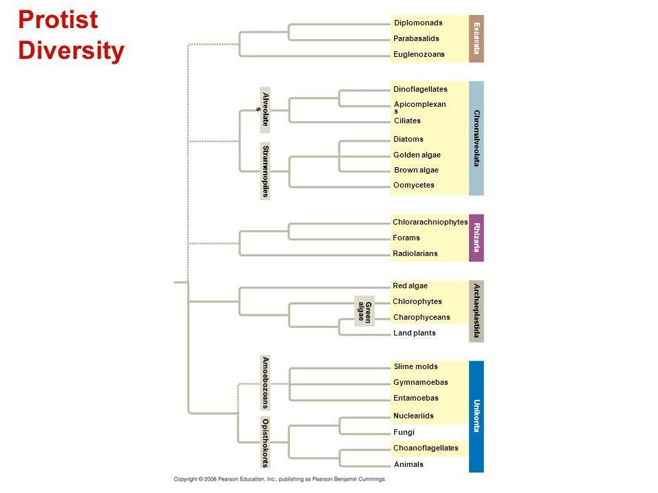 Protist Diversity Figure 28.3 Protist diversity