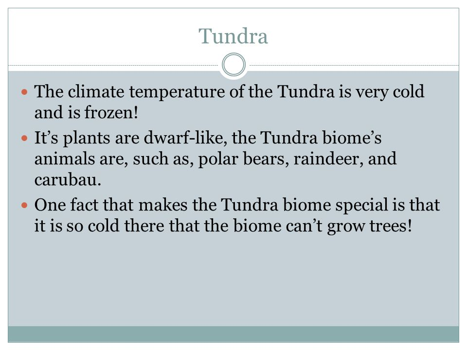 Tundra The climate temperature of the Tundra is very cold and is frozen!