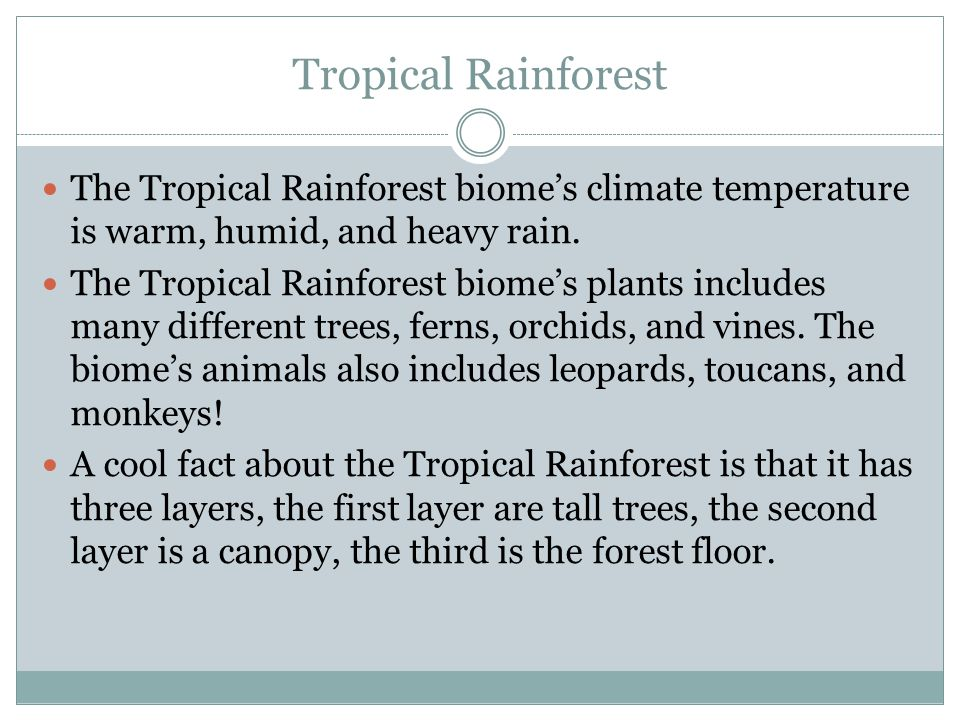 Tropical Rainforest The Tropical Rainforest biome's climate temperature is warm, humid, and heavy rain.