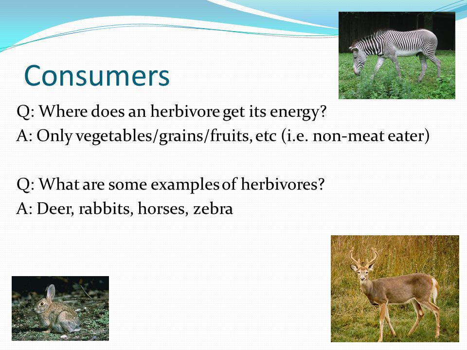 Consumers Q: Where does an herbivore get its energy
