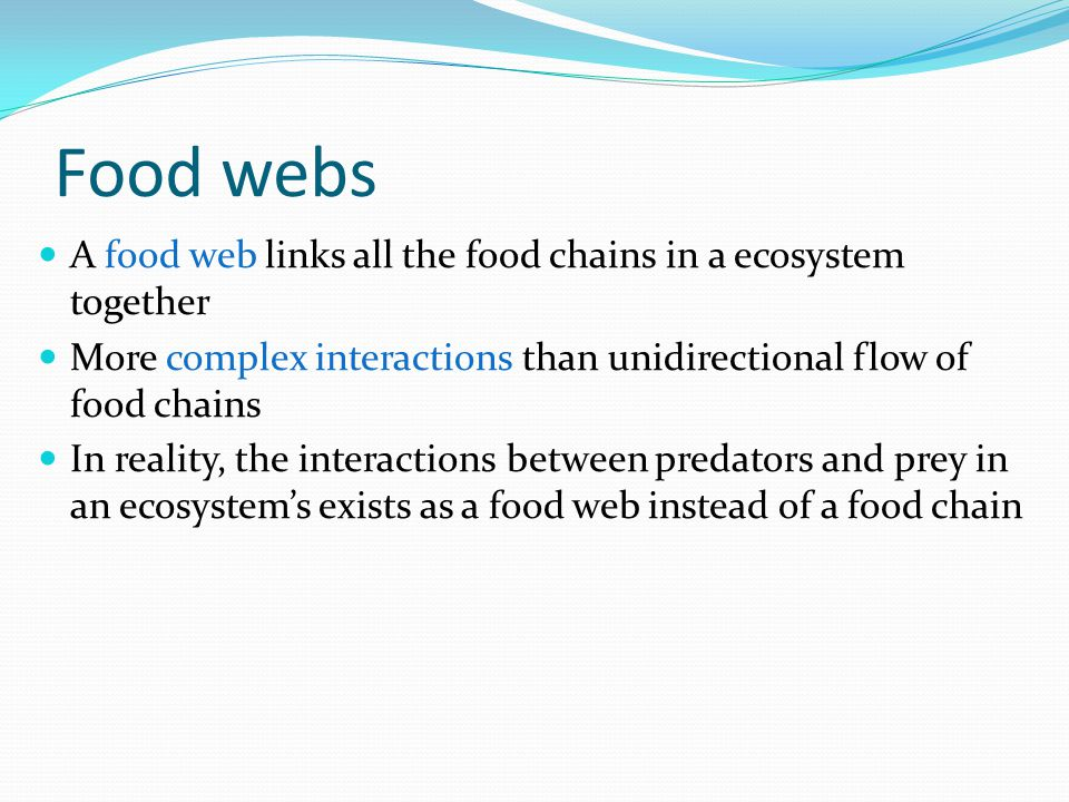 Food webs A food web links all the food chains in a ecosystem together