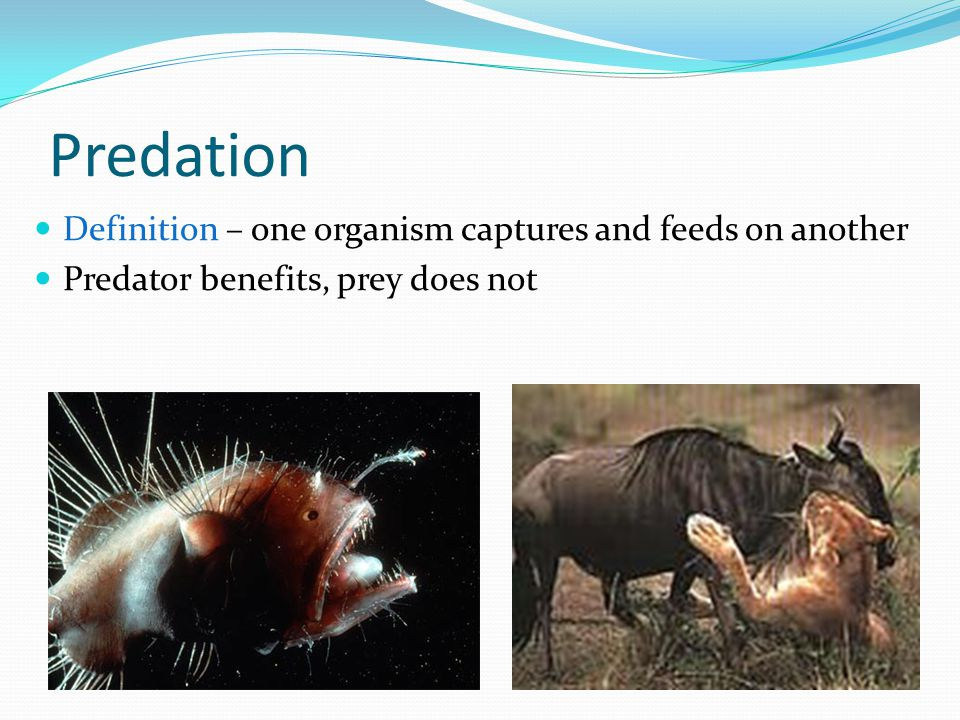 Predation Definition – one organism captures and feeds on another