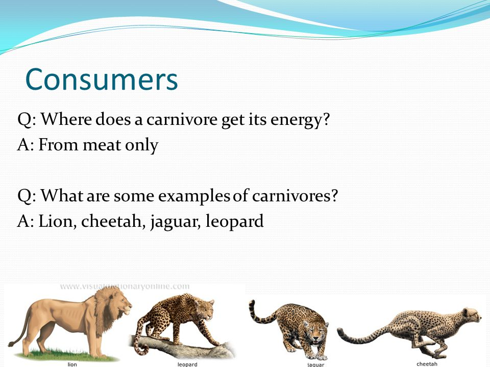 Consumers Q: Where does a carnivore get its energy.