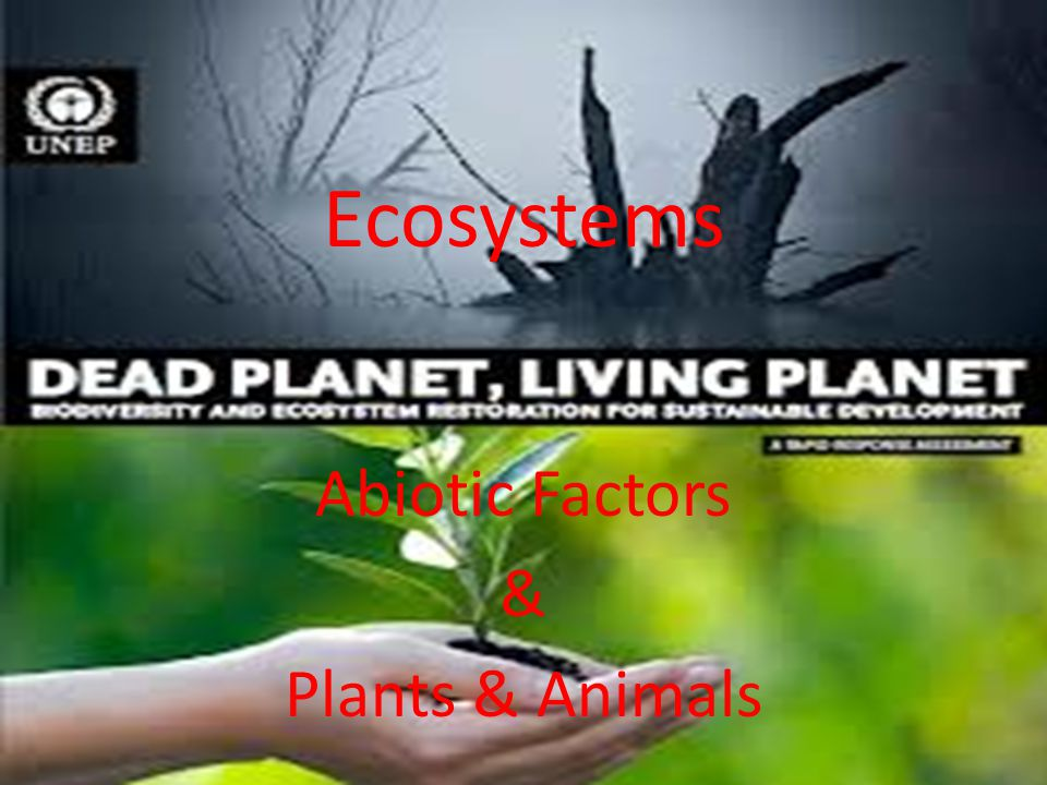 Abiotic Factors & Plants & Animals