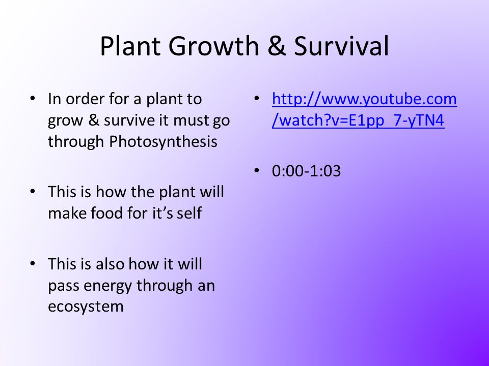 Plant Growth & Survival