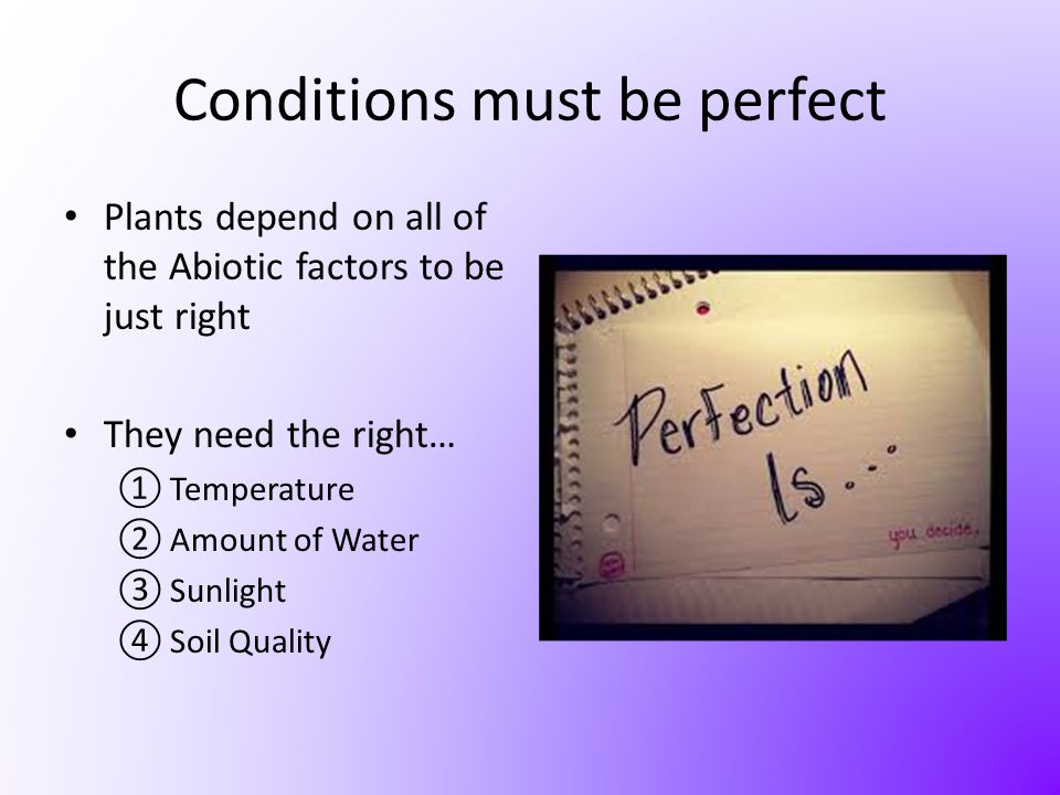 Conditions must be perfect
