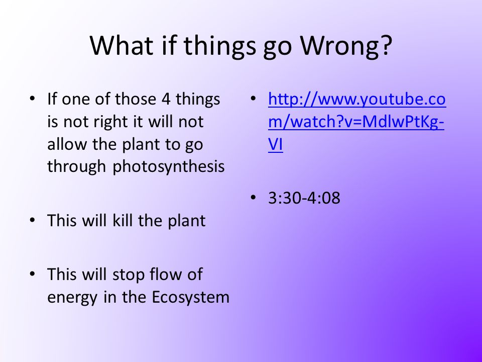 What if things go Wrong If one of those 4 things is not right it will not allow the plant to go through photosynthesis.