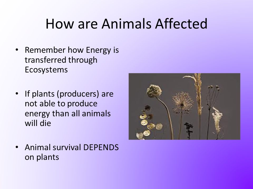 How are Animals Affected