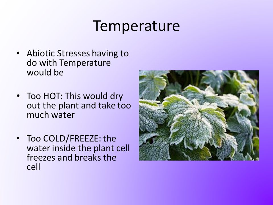 Temperature Abiotic Stresses having to do with Temperature would be