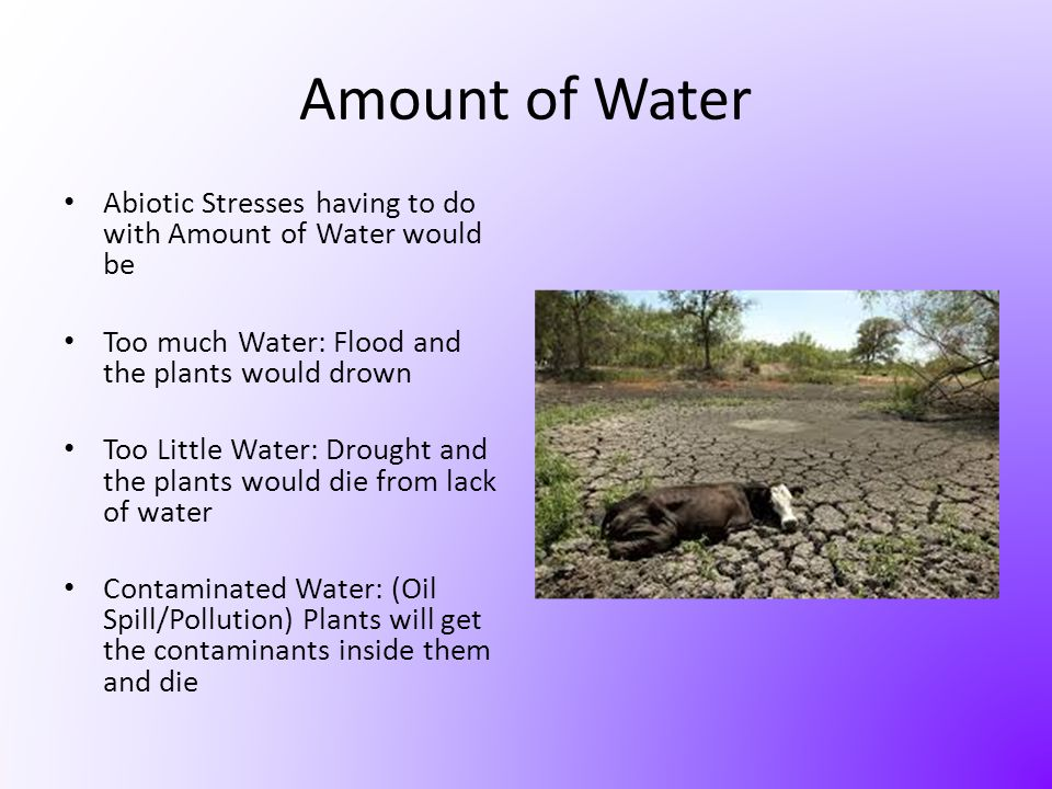 Amount of Water Abiotic Stresses having to do with Amount of Water would be. Too much Water: Flood and the plants would drown.