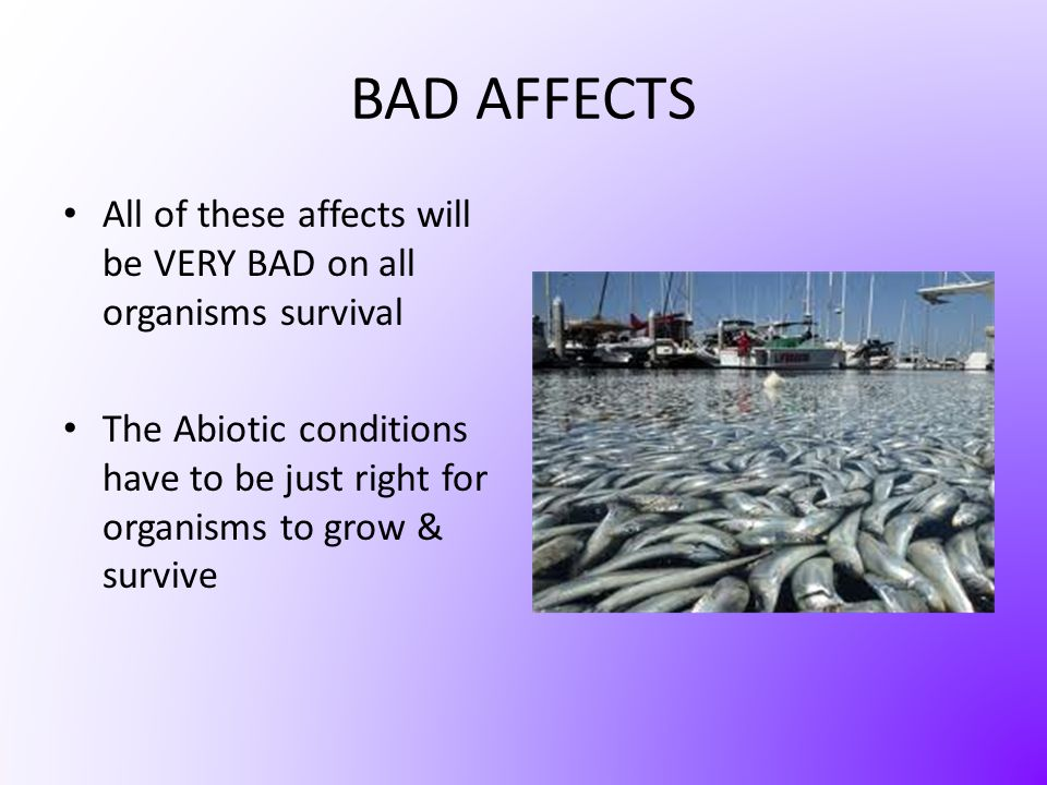 BAD AFFECTS All of these affects will be VERY BAD on all organisms survival.