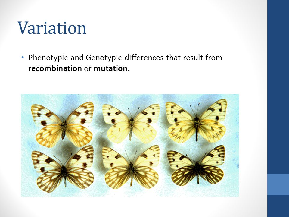 Variation Phenotypic and Genotypic differences that result from recombination or mutation.