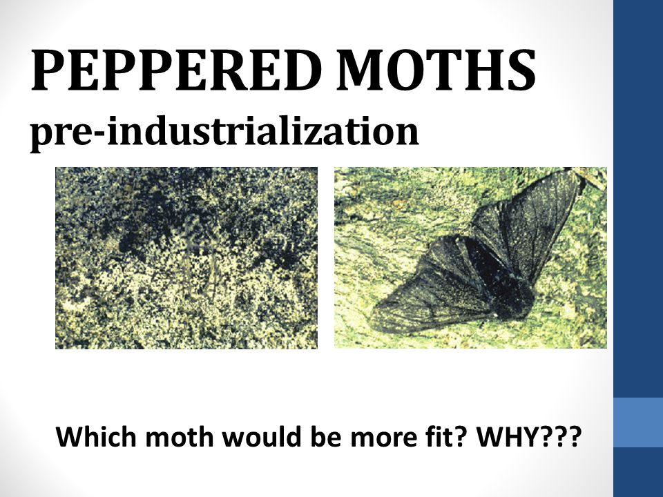 PEPPERED MOTHS pre-industrialization