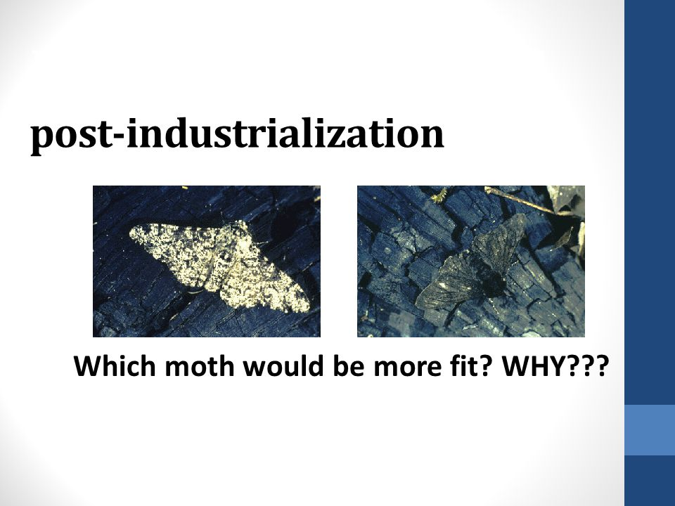 PEPPERED MOTHS post-industrialization
