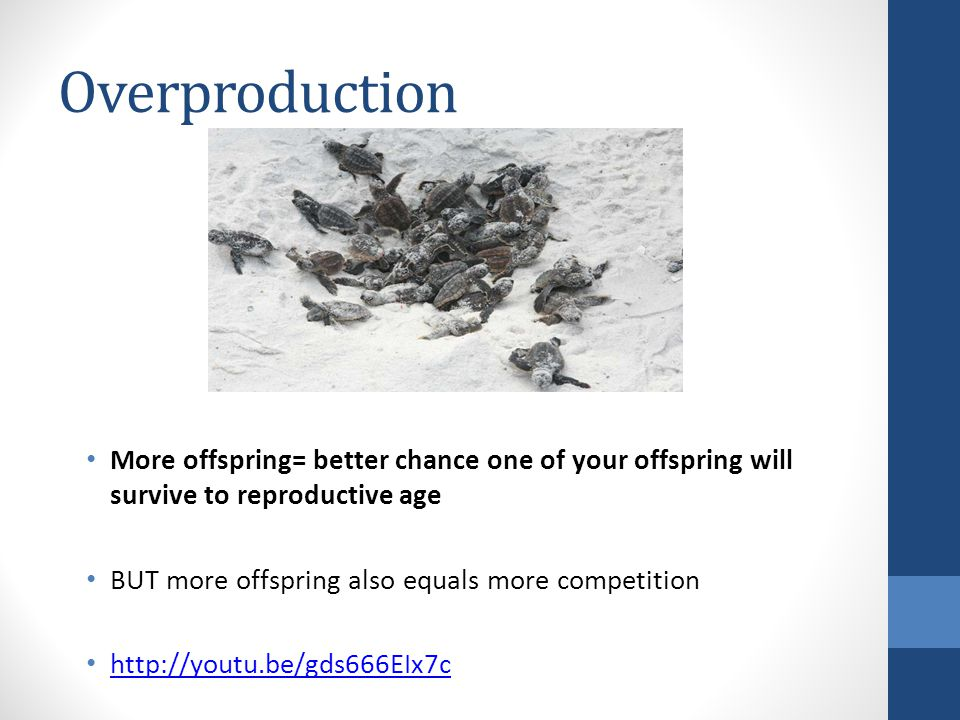 Overproduction More offspring= better chance one of your offspring will survive to reproductive age.