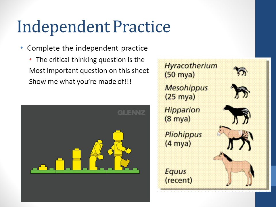 Independent Practice Complete the independent practice