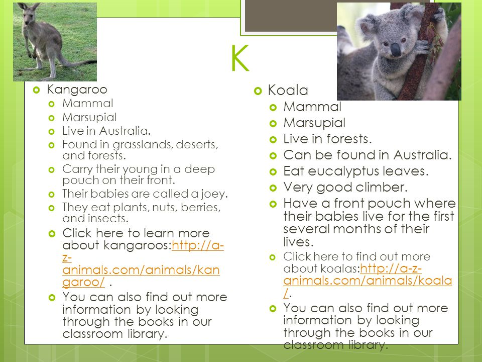 K Koala Mammal Marsupial Live in forests. Can be found in Australia.