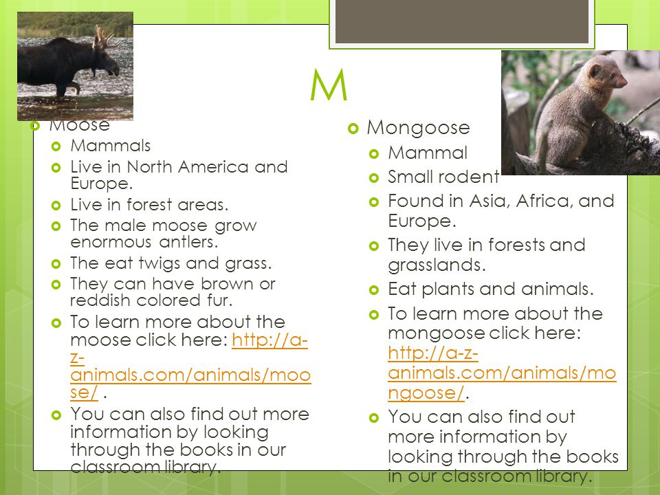 M Moose. Mammals. Live in North America and Europe. Live in forest areas. The male moose grow enormous antlers.