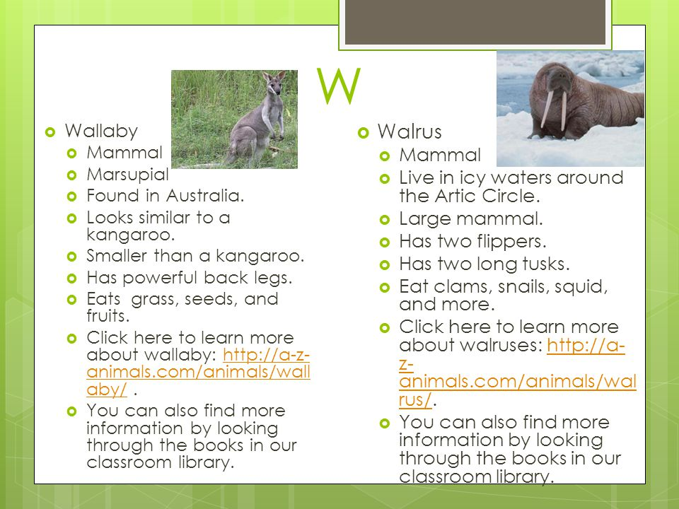 W Walrus Wallaby Mammal Live in icy waters around the Artic Circle.