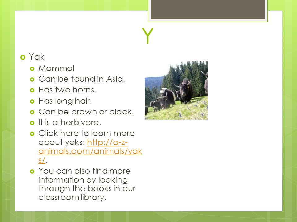 Y Yak Mammal Can be found in Asia. Has two horns. Has long hair.