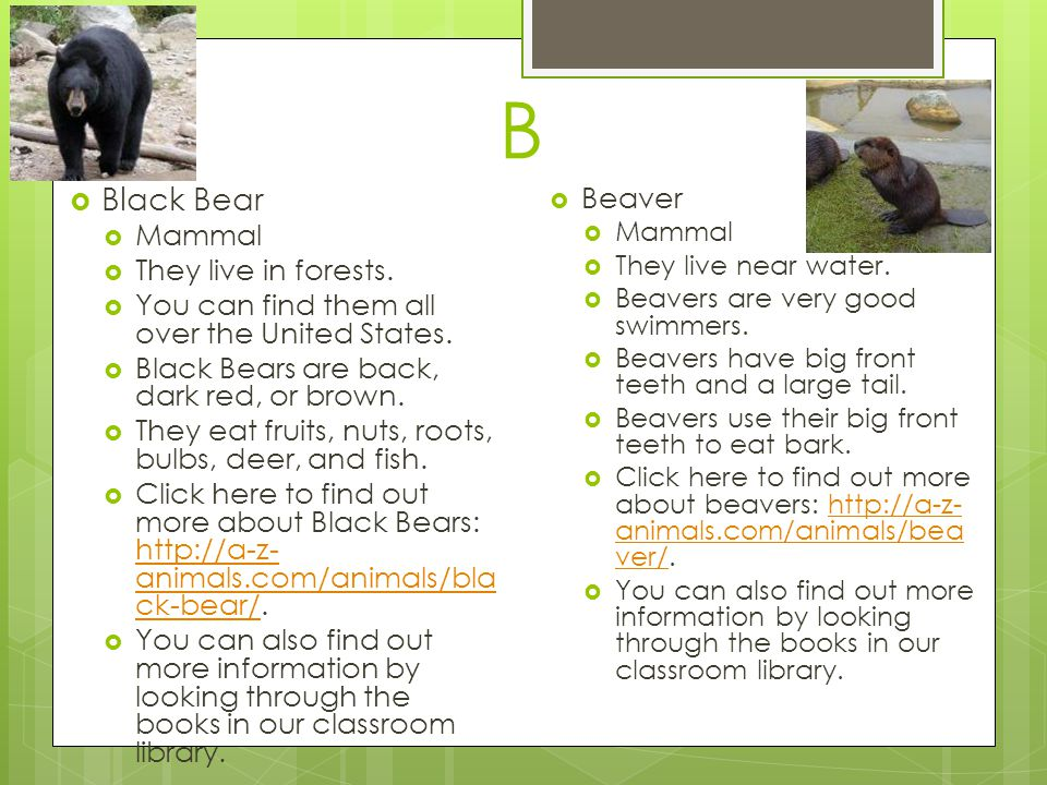 B Black Bear Beaver Mammal They live in forests.
