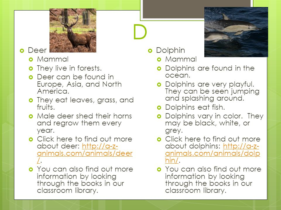D Deer Dolphin Mammal They live in forests.