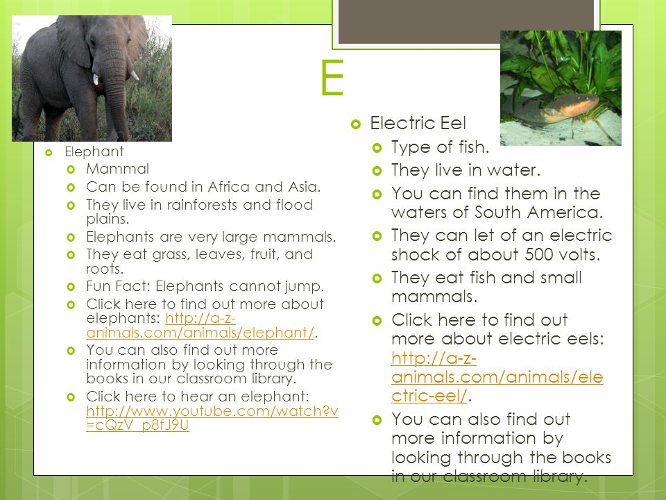E Electric Eel Type of fish. They live in water.