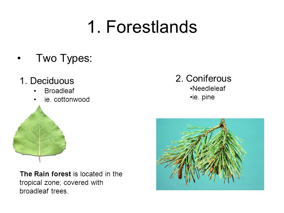 1. Forestlands Two Types: 2. Coniferous Deciduous Needleleaf Broadleaf