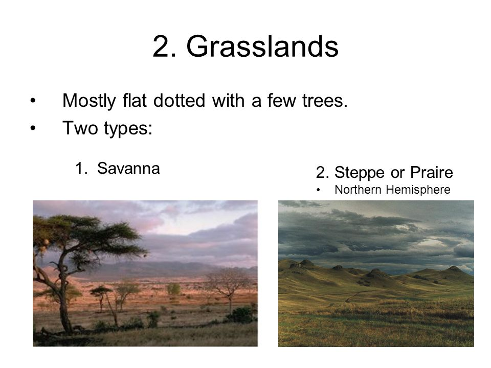 2. Grasslands Mostly flat dotted with a few trees. Two types: