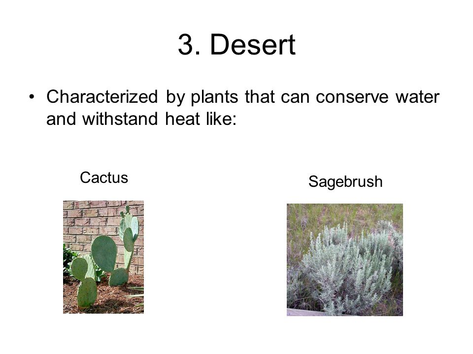 3. Desert Characterized by plants that can conserve water and withstand heat like: Cactus Sagebrush
